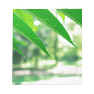 Defocused and blurred branch ailanthus notepad