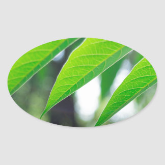 Defocused and blurred branch ailanthus oval sticker