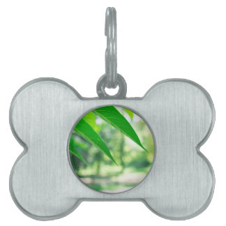 Defocused and blurred branch ailanthus pet ID tag