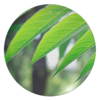 Defocused and blurred branch ailanthus plates