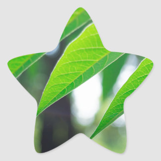 Defocused and blurred branch ailanthus star sticker