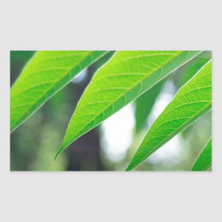 Defocused and blurred branch ailanthus sticker