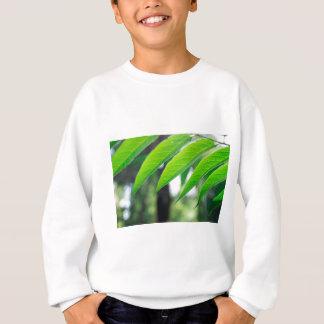 Defocused and blurred branch ailanthus sweatshirt