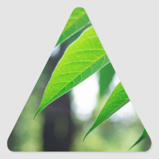 Defocused and blurred branch ailanthus triangle sticker