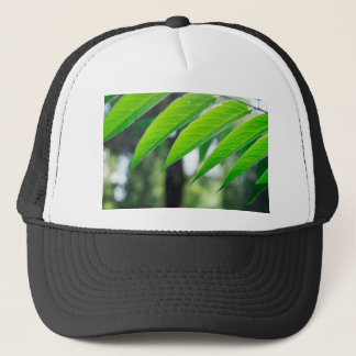 Defocused and blurred branch ailanthus trucker hat