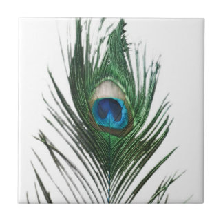 Defused Peacock Feather Trivet