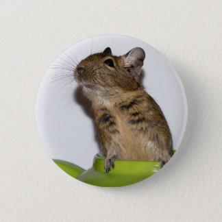 Degu in Green Photograph 2 Inch Round Button