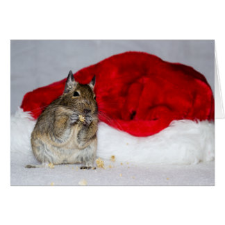 Degu & Santa Hat Christmas Card