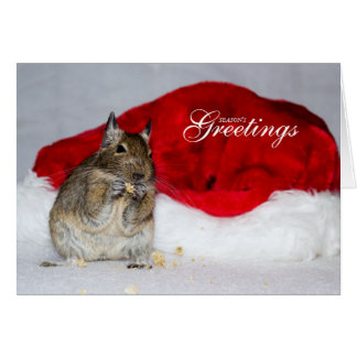 Degu & Santa Hat Season's Greetings Christmas Card