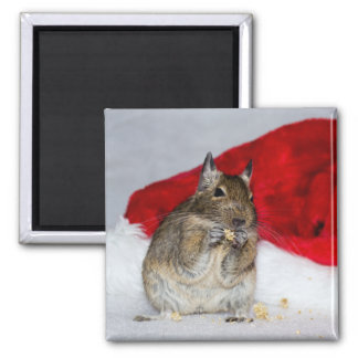 Degu with Santa Hat Festive Square Magnet