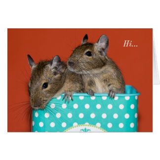 Degus inside Coffee Tin 'Hi' Card