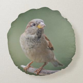 Dekokissen sparrow sparrow photo Jean Louis Round Pillow