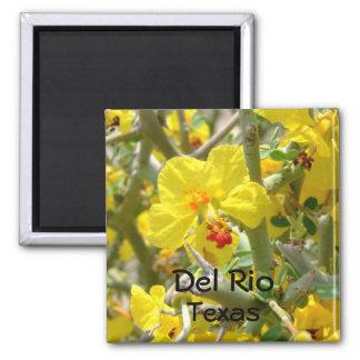 Del Rio Texas Magnet yellow Allthorn flower