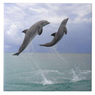 Delfin (Grosser Tuemmler) Ceramic Tile