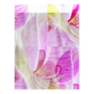 Delicate and Beautiful Orchid Floral Postcard