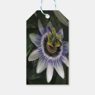 Delicate and Beautiful Passiflora Flower Pack Of Gift Tags