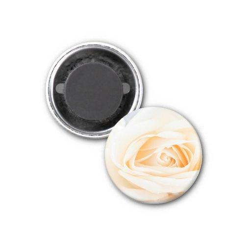 Delicate beige roses refrigerator magnet