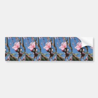 Delicate Buds of Peach Tree Blossom Bumper Sticker