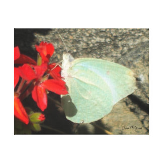 Delicate Butterfly Canvas Print