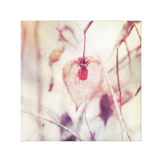Delicate Chinese Lantern Plant Seed Pod in Winter Canvas Print