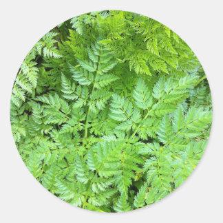 Delicate Ferns Round Sticker