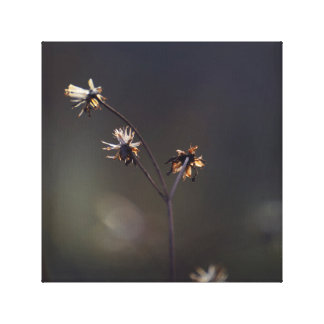 Delicate Glowing Dried Plant Stems Dark Background Canvas Print