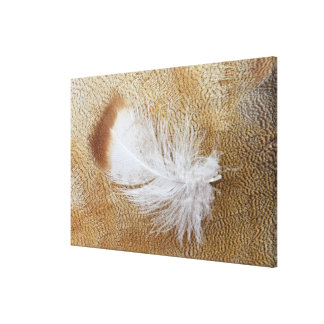 Delicate Goose Feathers Canvas Print