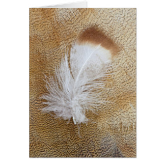 Delicate Goose Feathers Card