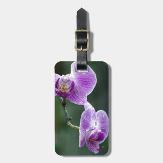 Delicate Luggage Tag