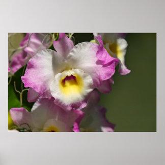 Delicate Orquid Poster