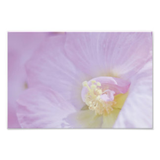 Delicate Pink Lavender Flower Art Photo