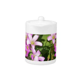 Delicate pink Spring wildflowers