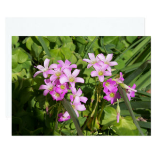 Delicate pink Spring wildflowers Card