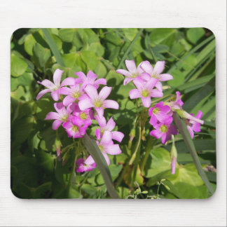 Delicate pink Spring wildflowers Mouse Pad