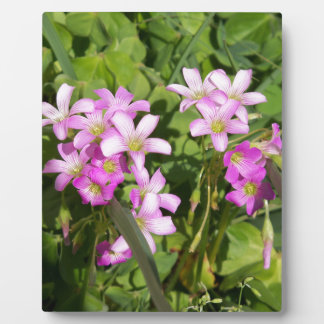 Delicate pink Spring wildflowers Plaque
