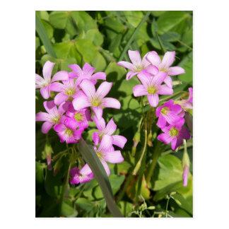 Delicate pink Spring wildflowers Postcard