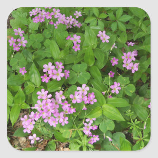 Delicate pink Spring wildflowers Square Sticker
