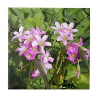 Delicate pink Spring wildflowers Tile