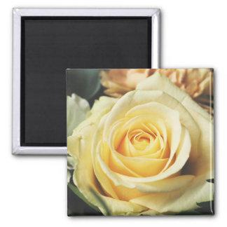 Delicate Rose Cream Colored Magnet