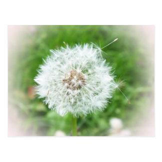 delicate white blossom postcard