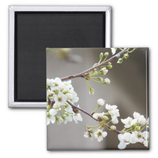 Delicate White Blossoms Refrigerator Magnet