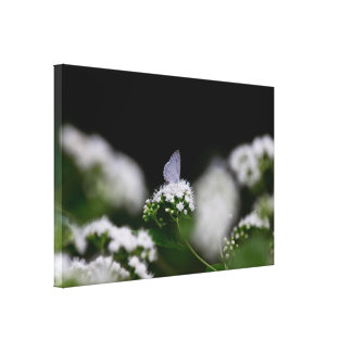 Delicate White Moth Canvas Print