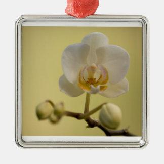 Delicate White Orchid Silver-Colored Square Ornament