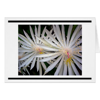 Delicate White Shooting Star Flowers Card