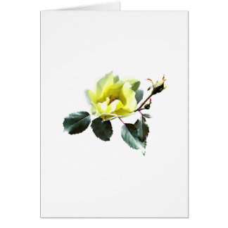 Delicate Yellow Rose Card