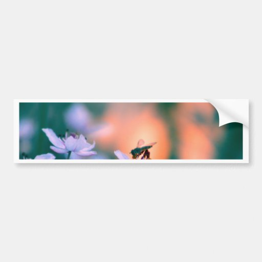 delight bumper sticker