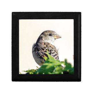 Delightful Bird Photograph Gift Boxes