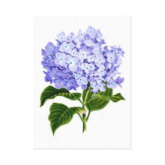 Delightful Hydrangea Canvas Print
