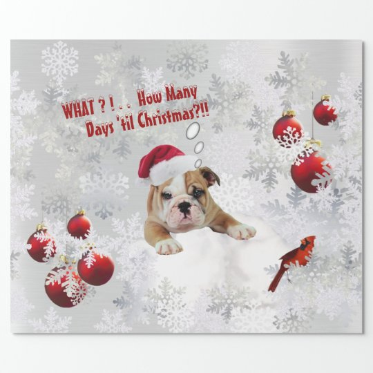 Delightful Sad Bulldog Puppy Christmas Gift Wrap