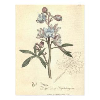 Delphinium Postcard